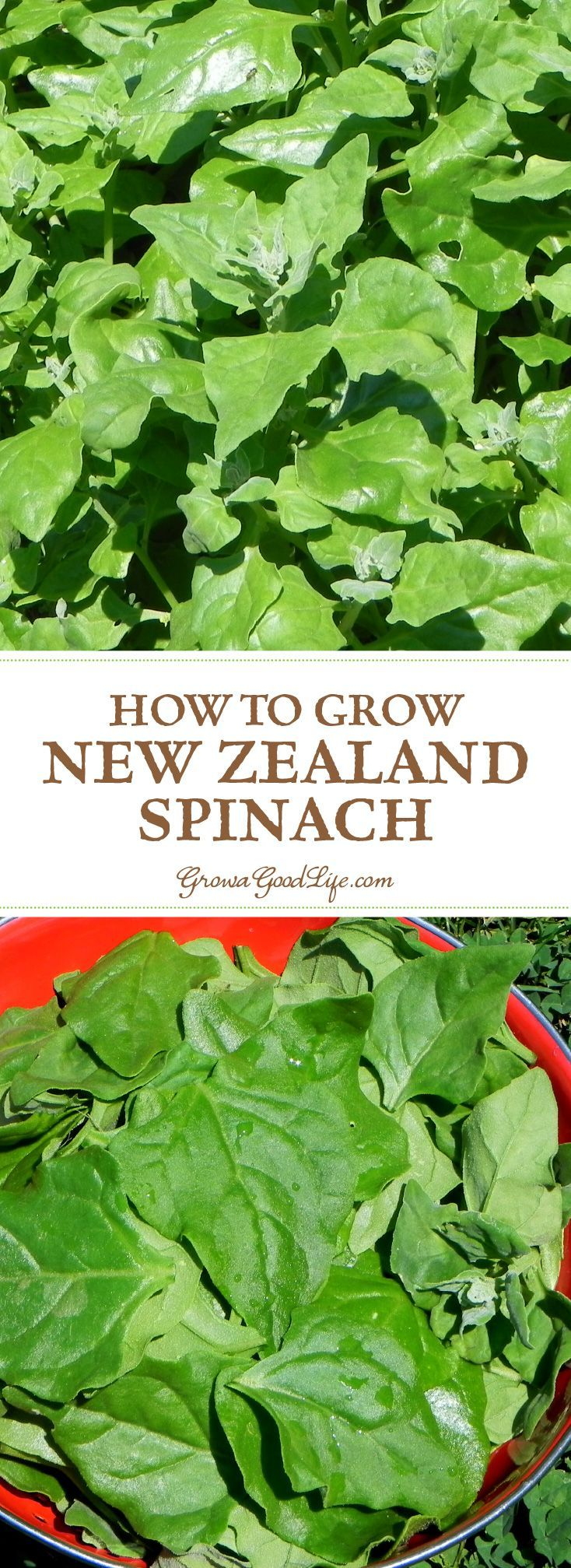 vegetable planting guide new zealand