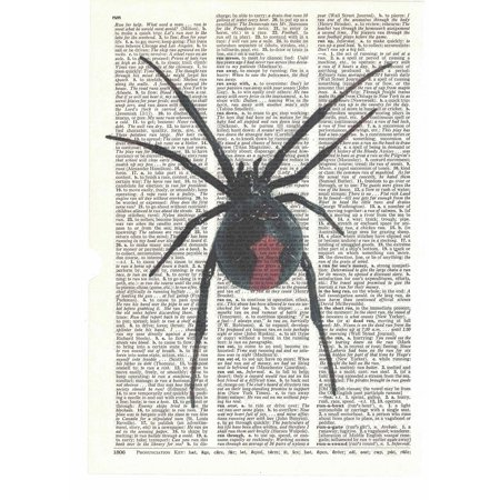 spider dictionary